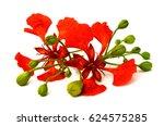bunch of delonix regia or... | Shutterstock . vector #624575285