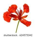 alstroemeria on a white... | Shutterstock . vector #624575342