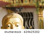 Pigeon On Buddha Head