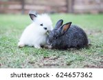 funny baby rabbits in grass. | Shutterstock . vector #624657362
