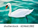 Small photo of White swan on water