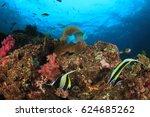 coral reef fish underwater | Shutterstock . vector #624685262