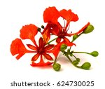 beautiful red delonix regia... | Shutterstock . vector #624730025