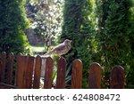 Blackbird On Fences
