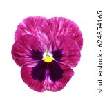 Purple Pansy Isolated On White...