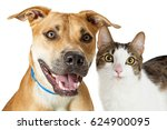 Stock photo smiling large dog and cat together 624900095