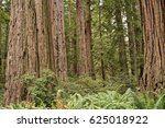 california coastal redwoods | Shutterstock . vector #625018922