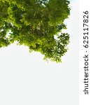 green leaves and branches on... | Shutterstock . vector #625117826