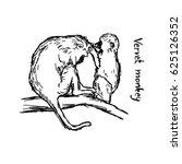 Vervet Monkey Family   Vector...