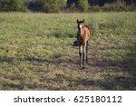 foal   Shutterstock . vector #625180112