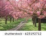 japanese cherry blossoms... | Shutterstock . vector #625192712