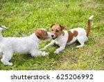 cute jack russel terrier in the ... | Shutterstock . vector #625206992