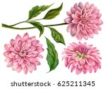 Stock photo watercolor set of dahlia flowers hand drawn floral illustration botanical elements isolated on 625211345