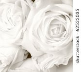 White Roses In Close Up  ...