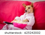Stock photo chihuahua dog watching tv or a movie sitting on a red sofa or couch with remote control changing 625242032