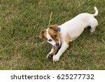 cute young dog having fun in a... | Shutterstock . vector #625277732