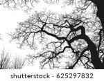 realistic tree silhouette ...   Shutterstock . vector #625297832