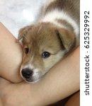 puppy | Shutterstock . vector #625329992