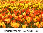 Field Of Yellow  Orange And Re...