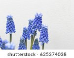Blue Grape Hyacinths With...