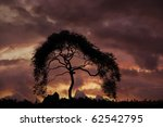 Silhouette of African tree with red sky in background - stock photo
