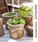 seedlings of basil  coriander... | Shutterstock . vector #625462982