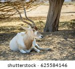 Small photo of Antelope addax (Addax nasomaculatus) known as the screw-horn antelope. Due to danger of extinction it was introduced from Sahara desert and acclimatized in nature reserve near Eilat, Israel