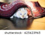 White Cat On The Floor Under...