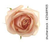 Stock photo pink rose closeup 625689905