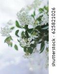 Small photo of Spiraea vanhouttei. Spiraea Flowers on a Table in a Garden. Spiraea Flowers Bouquet.