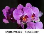 orchid | Shutterstock . vector #62583889