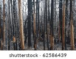 Charred And Blackened Forest...