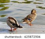 Mallard Duck Pair On The Dock...
