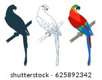 vector macaw parrot... | Shutterstock .eps vector #625892342