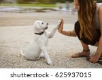 labrador puppy and young woman... | Shutterstock . vector #625937015