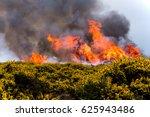 Heathland Fire With Gorse In...