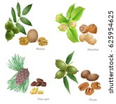 four nuts with plant and peeled ... | Shutterstock .eps vector #625954625