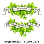 fresh hop plants  green leaves  ... | Shutterstock .eps vector #625959575