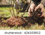 Female Gardener Planting A...