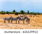 zebra herd | Shutterstock . vector #626129912
