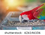 Red Macaw Eatting Nature Food...