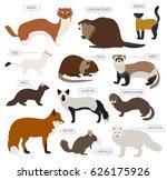 fur farming. flat design....   Shutterstock .eps vector #626175926
