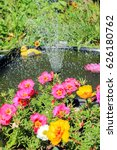 Multicolored Portulaca On The...