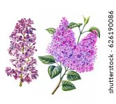 watercolor hand painted lilac... | Shutterstock . vector #626190086