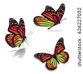 beautiful three monarch...   Shutterstock . vector #626227052