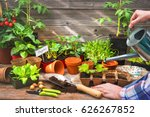 planting seedlings in... | Shutterstock . vector #626267852