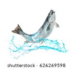 Atlantic Salmon Fish Jumping Out - Fine Art prints