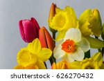 daffodil and tulip flowers...