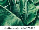 tropical banana leaf texture ... | Shutterstock . vector #626371322