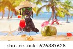 Stock photo black mutt dog posing on the beach with colorful cocktail 626389628